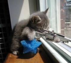 """""""Katten zijn moordenaars, houd ze binnen"""" (en laat ze niet met schiettuigen spelen)"""